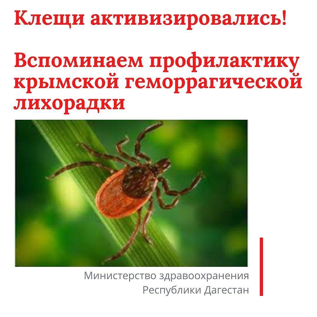Министерство здравоохранения РД предупреждает, в Дагестане наступил сезон активности клещей, которые служат переносчиком смертельно опасной болезни - крымской геморрагической лихорадки